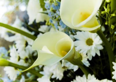 Flores Salon del Sol